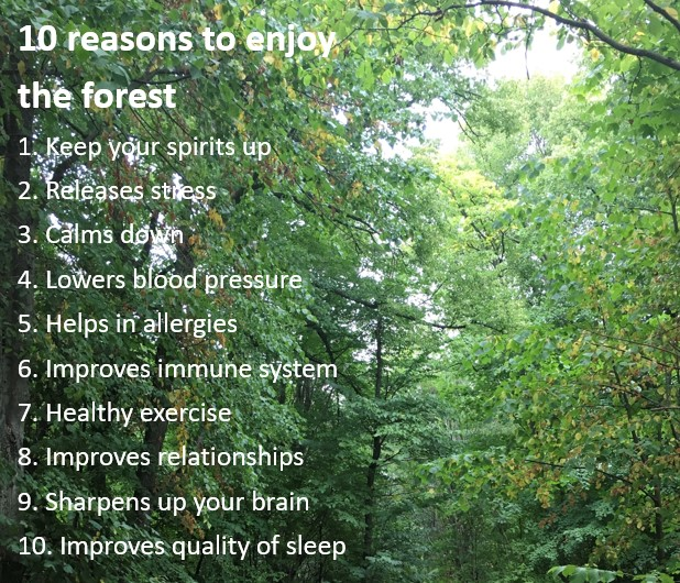 10 reasons to enjoy forest